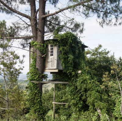 Forest Valley tree house