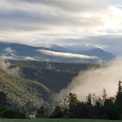 Misty view - Knysna forest